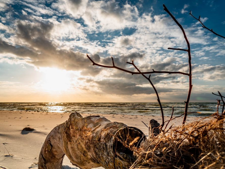 west-beach-4122317_1920